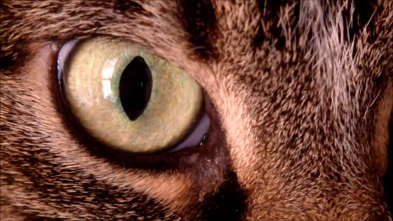 Cat Eyes Close