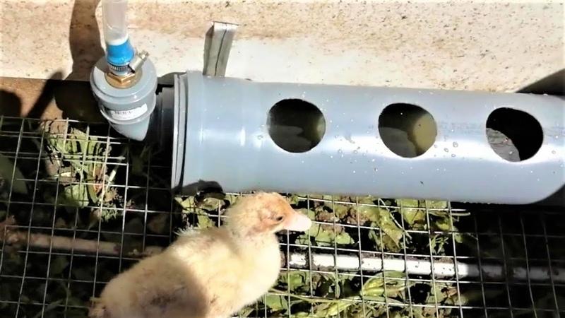 Автопоилка для Домашней Птицы Кур Уток Как Сделать Поилку из Трубы Ф110 Своими Руками 0