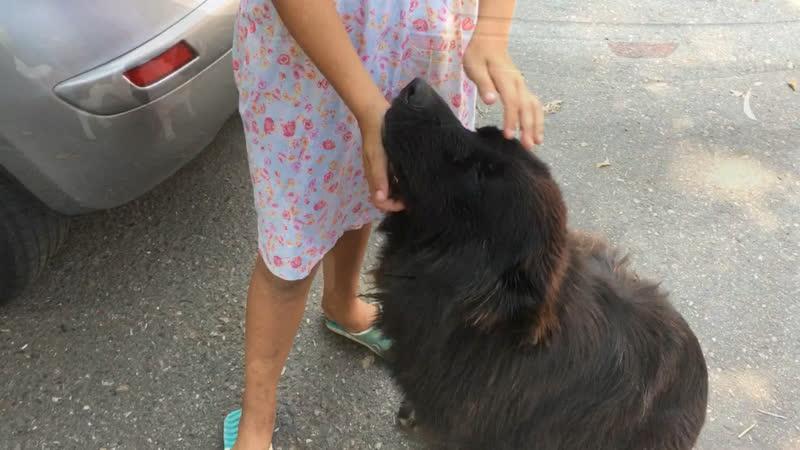 Собака Даша ищет дом