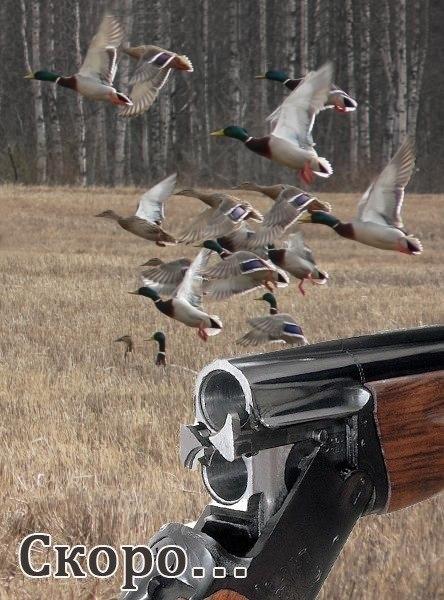 Поздравление с открытием охоты фото