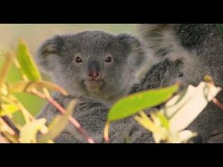 Смешные животные Австралии