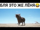 Тимон и Пумбагоблинский перевод без цензуры!