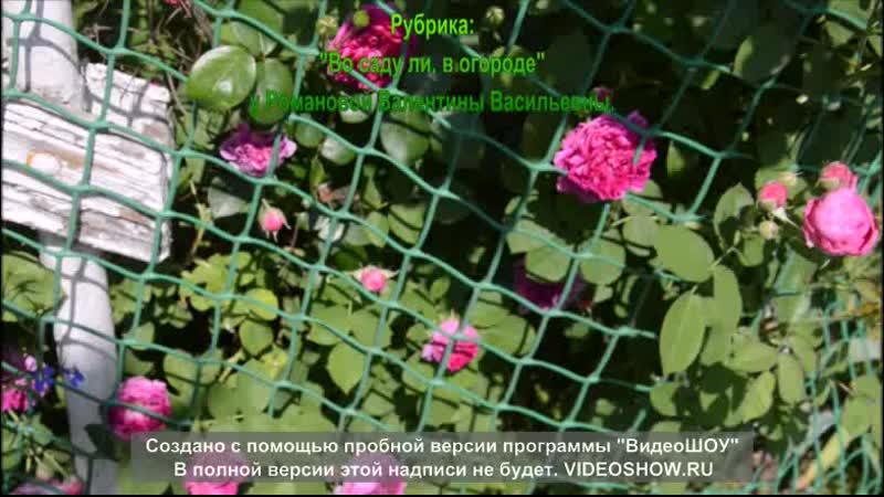 Во саду ли в огороде Романова Валентина Васильевна