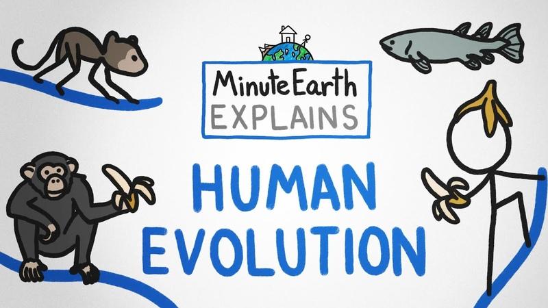 MinuteEarth Explains Human Evolution