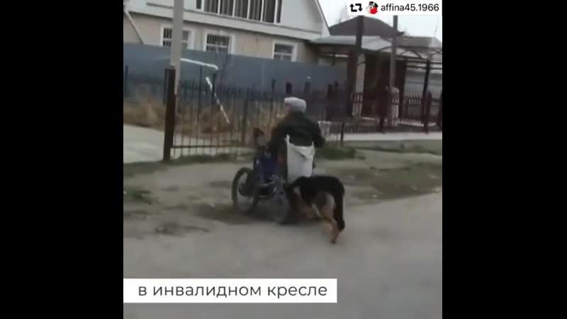 Собака самый верный друг