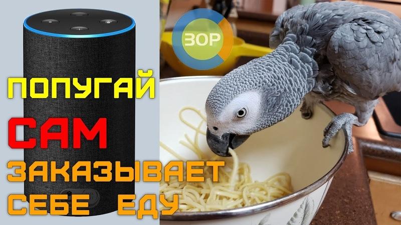 Попугай самостоятельно делает покупки в Amazon | Parrot self shopping at Amazon
