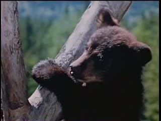 Дикий пес Севера / Nikki, Wild Dog of the North