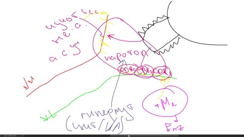 Иммунология. Взаимодействие Антитела с Антигеном. Идиотип. Паратоп. Биосинтез. Аффиность Авидность.
