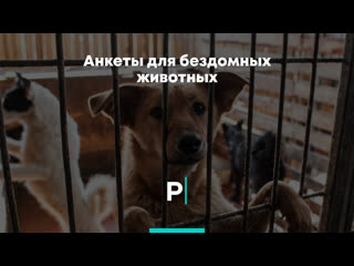 Анкеты для бездомных животных