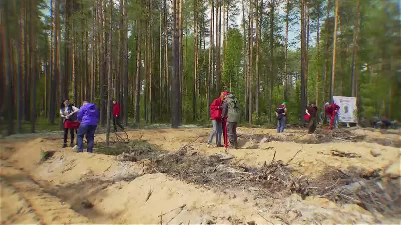 Саратовская область является участником международной акции Сад памяти цель которой высадить 27 миллионов деревьев в память
