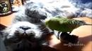 Смешные кошки приколы про кошек и котов 2017 10 Коты и Попугаи