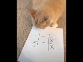 когда кот не любит проигрывать
