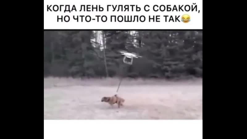 Когда лень гулять с собакой