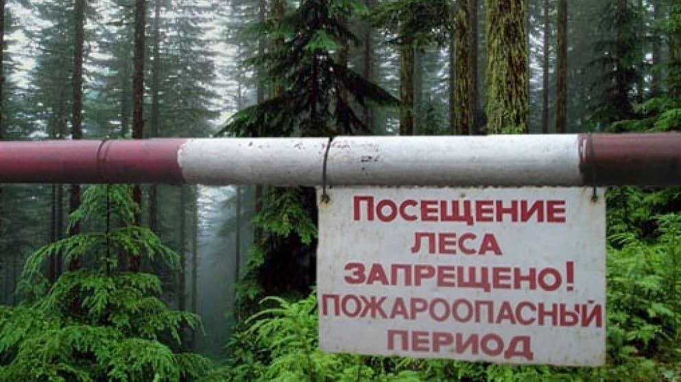 На территории Саратовской области снова введён режим ограничения пребывания граждан в лесах и запрещён въезд в них