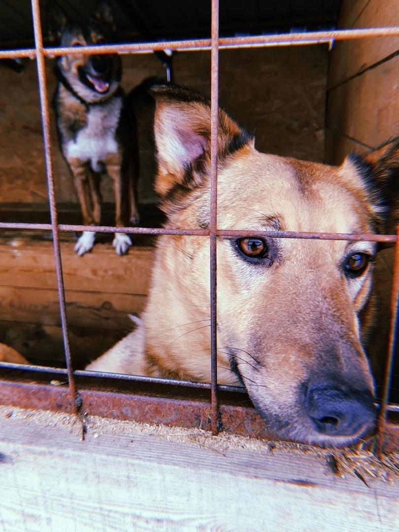 «Животные сами себе помочь не смогут», изображение №4