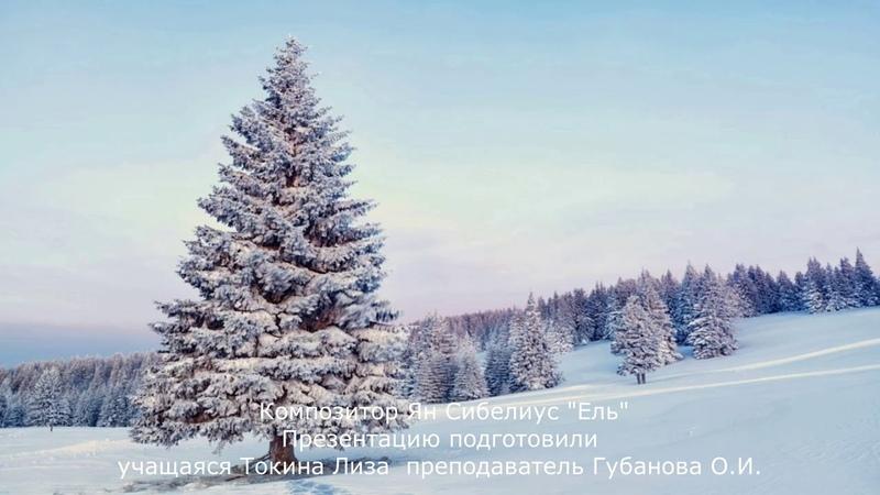 Презентация произведения Яна Сибелиуса Ель