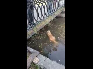 На Урале мужчина спас тонувшую в реке собаку