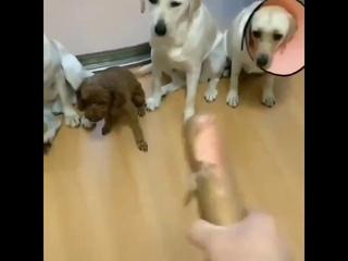 Собаки сдали своего друга по полной программе