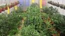 Честный и подробный обзор огорода на 04.06.2020 г. несколько дней дождей. Начала наводить порядок