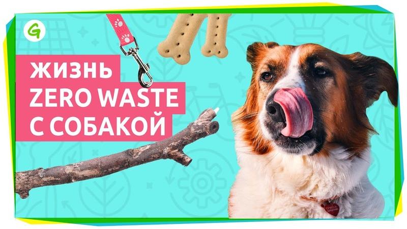 Жизнь zero waste с собакой