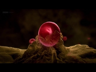 BBC: Удивительный мир крови