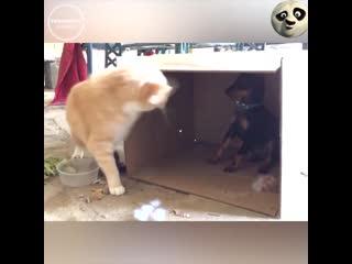 Забавные_домашние_животные