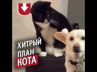 Очень терпеливый кот