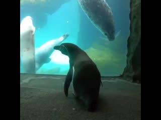 Пингвины смотрят на тюленей