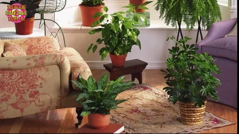 Три простых трюка для здоровья и красоты комнатных растений Они оживут и зацветут