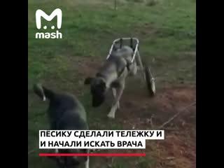 Женщина спасает бездомного пса