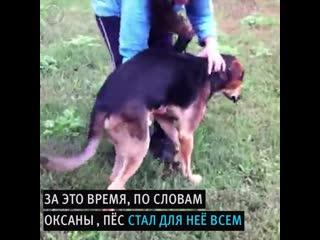 Жительница Анапы спасла бездомного пса-инвалида от усыпления