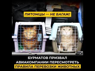 Питомцы  не багаж! Бурматов призвал авиакомпании пересмотреть правила перевозки животных