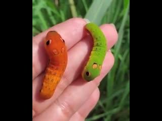 Эти гусеницы сбежали из мультика