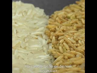 Как приготовить идеальный рис