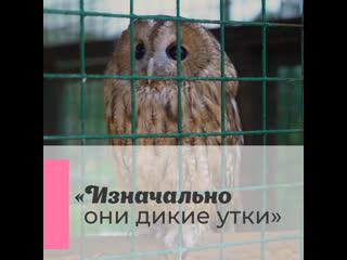 Как выпускают на волю птиц из Центра передержки диких животных