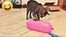 СМЕШНЫЕ ЖИВОТНЫЕ 😂 ЛУЧШИЕ ПРИКОЛЫ 2020! Смешные видео - Смешные коты приколы с котами до слез 3