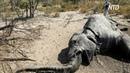 Учёные рассказали о причине мистической смерти сотен слонов в Африке