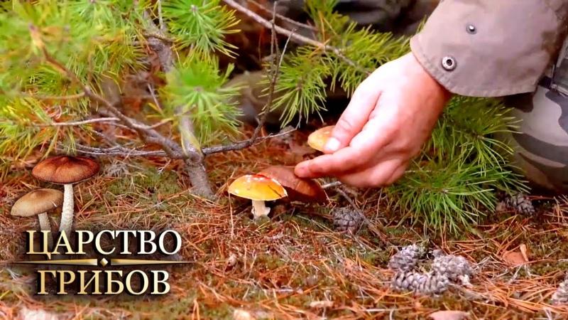 Ядовитые грибы Царство грибов @Моя Планета