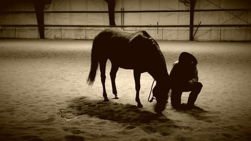 Alternative PTSD Therapies Equine Therapy