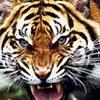 Тигр Теранова