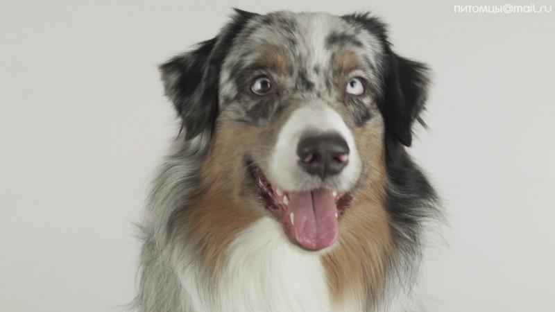 Как правильно стричь собаке когти