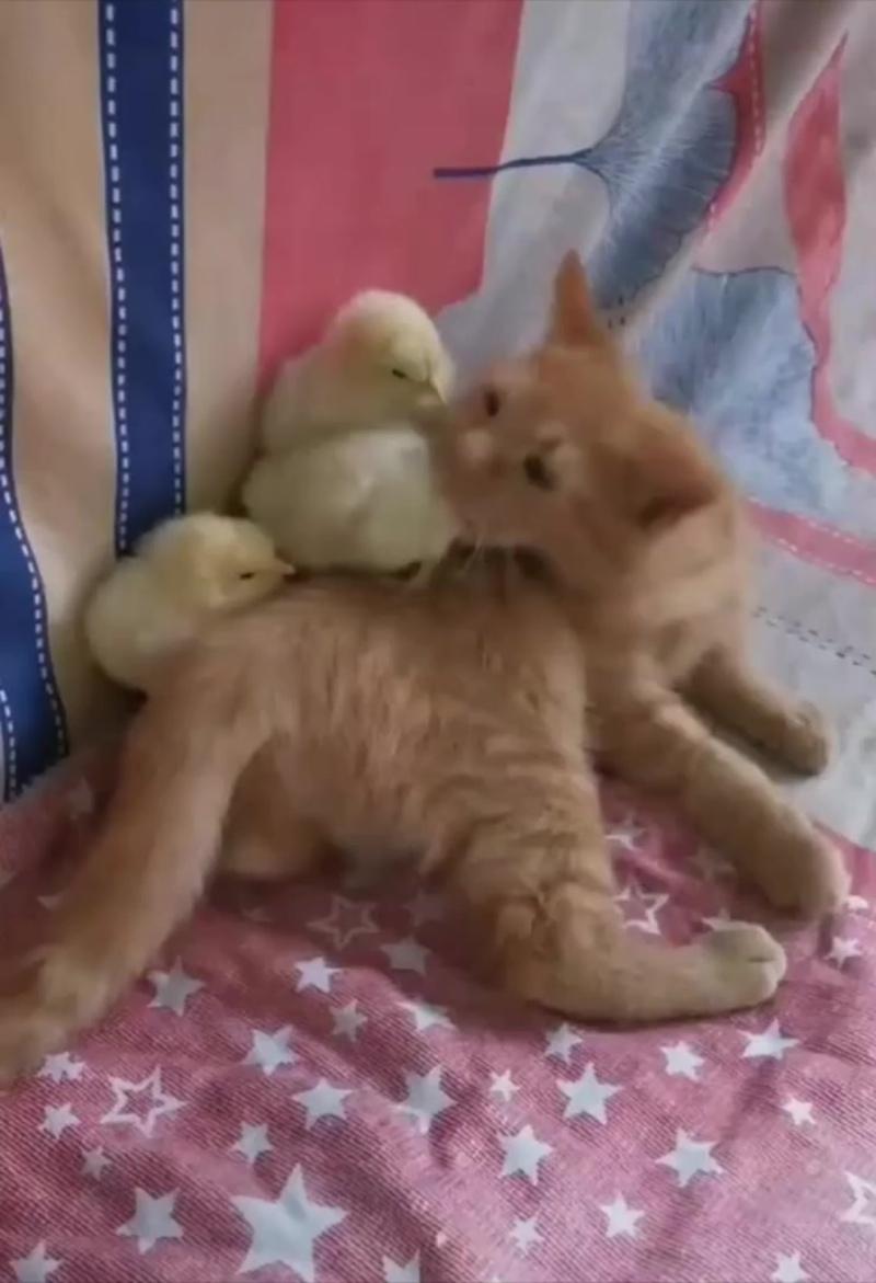 Вы точно мои котята?