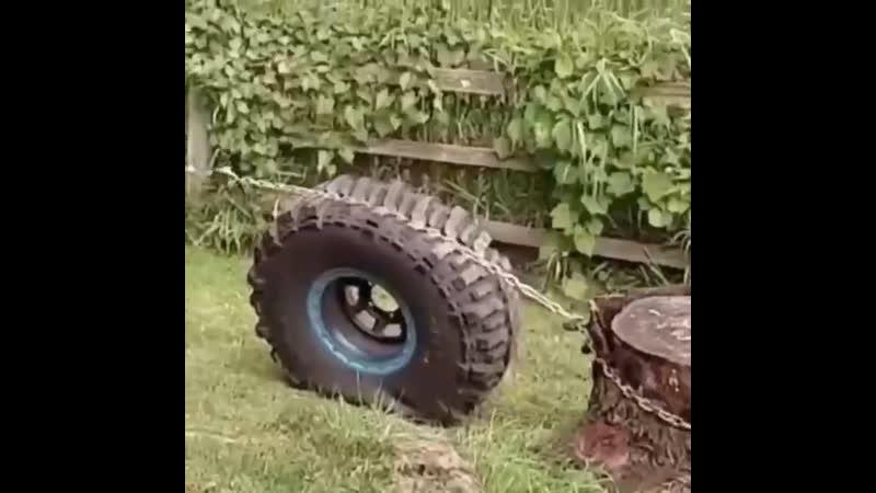 Как с помощью колеса вырвать пень