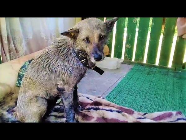 В Ханты Мансийске добровольцы спасли из заточения бездомную собаку