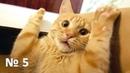 Чуть не надорвал живот 🤣 / Смешные животные / Мемы про кошек / Милые и пушистые / Новые приколы №5