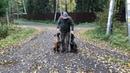 Как я выгуливаю своих собак