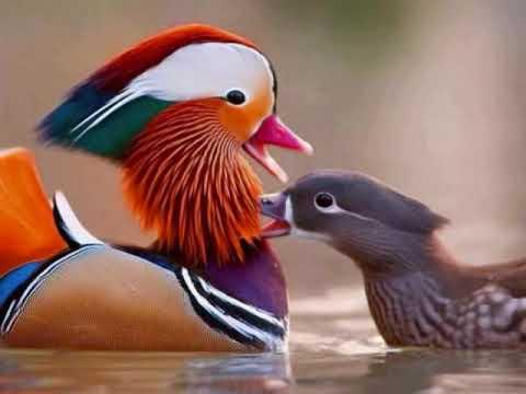 Most Beautiful love Birds In The World Beautiful birds