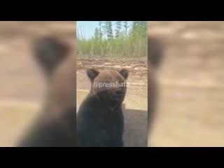 Мимимишка