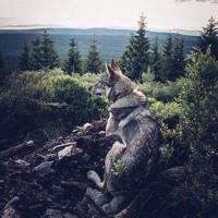 Фотография Olya Shcheblykina ВКонтакте