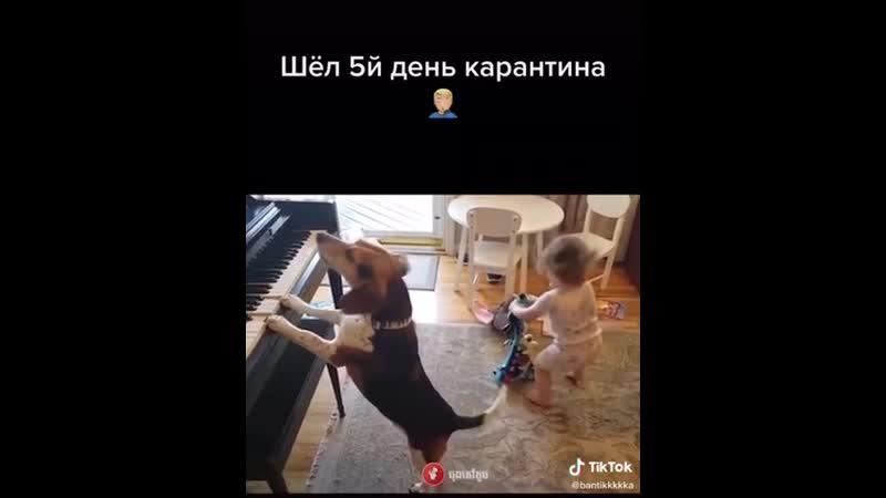 VIDEO 2020 04 03 22 15